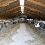 Gorredijk melkveebedrijf 3